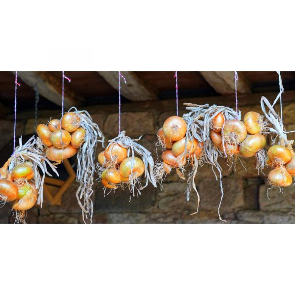 onions-4468045_1920